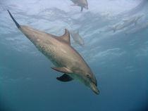 Im Rausch der Tiefe von Gesellschaft zur Rettung der Delphine e.V.
